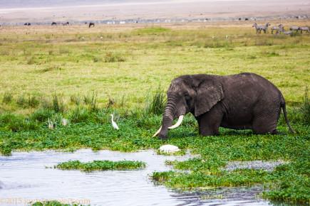 Tanzania2015-05-14